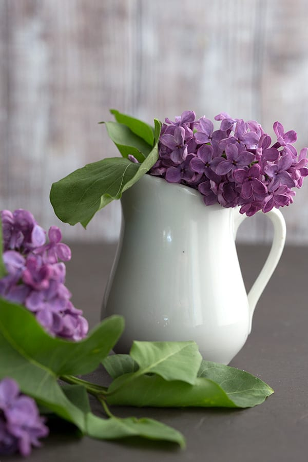 Purple lilacs in a small white vase