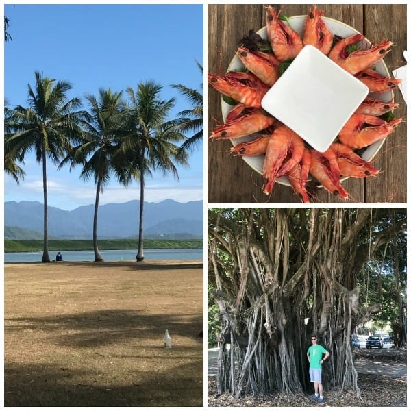 Scenes from Port Douglas